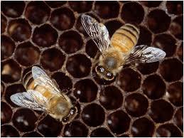 Técnica metaheurística bioinspiradas: Colonia de abejas